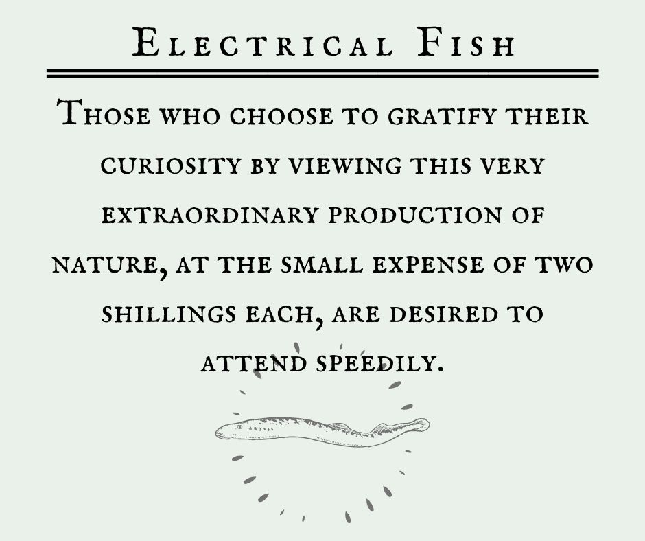 Electrical Fish: Those who choose to gratify their curiosity by viewing this very extraordinary production of nature, at the small expense of two shillings each, are desired to attend speedily.