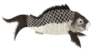 Japanese style illustration of a carp.