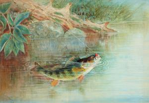 Fish in a fresh pond with foliage around